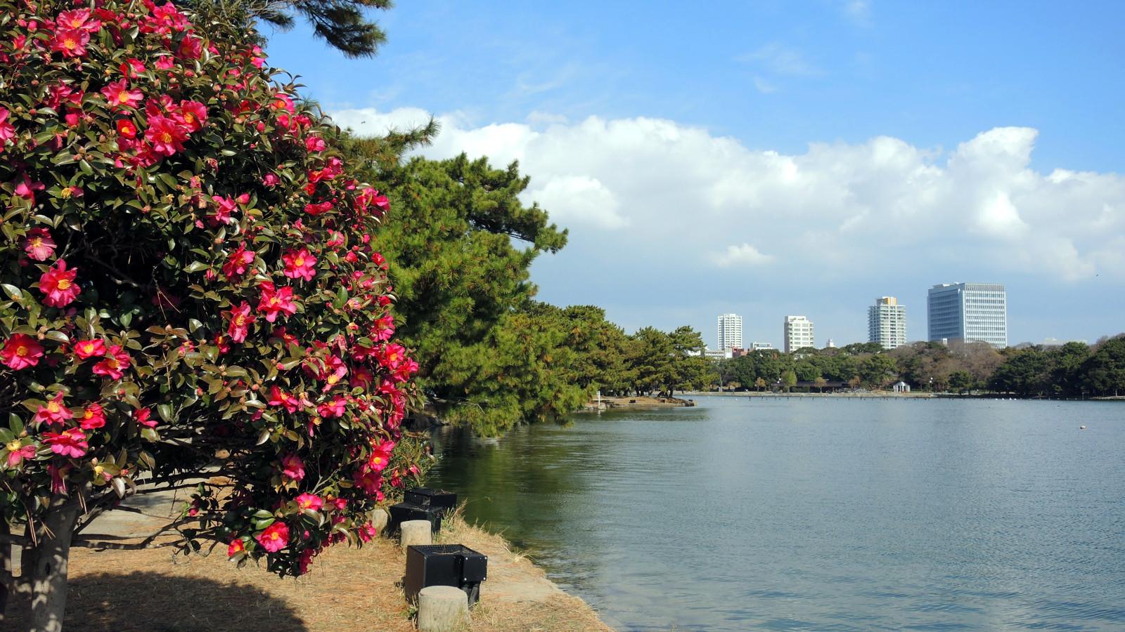 Ohori Park Fukuoka Kyushu The Real Japan Rob Dyer