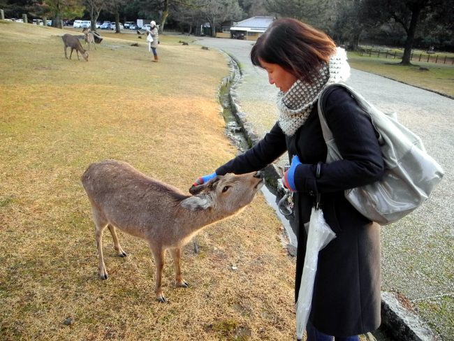 Hand Feeding Deer in Nara Park