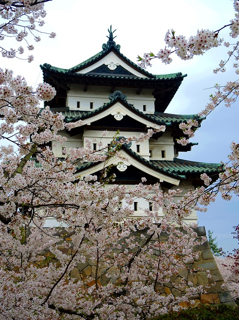 Hirosaki castle sakura cherry blossom The Real Japan Rob Dyer