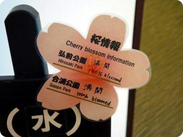 sakura cherry blossom The Real Japan Rob Dyer