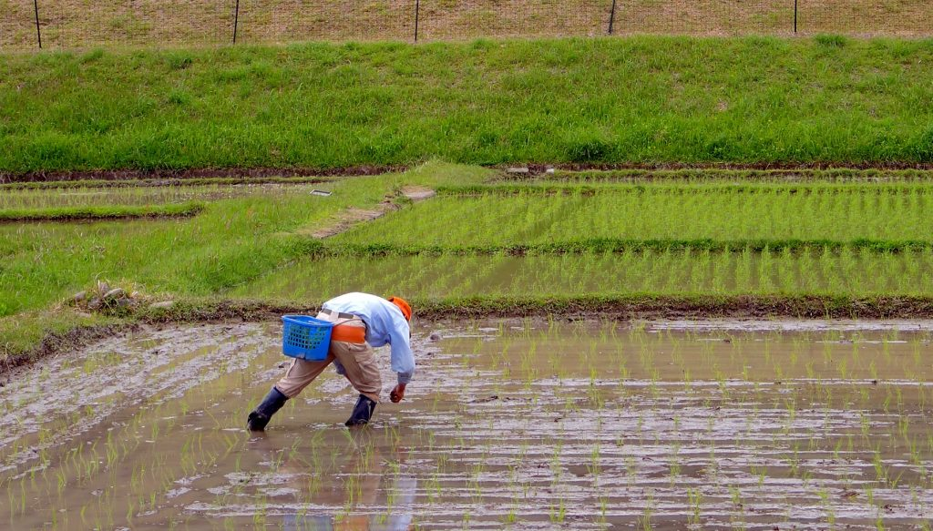 rice farmer The Real Japan Rob Dyer