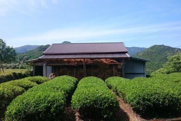 Kumano Kodo route Wakayama Visiting Japan Without Speaking Japanese Rob Dyer The Real japan