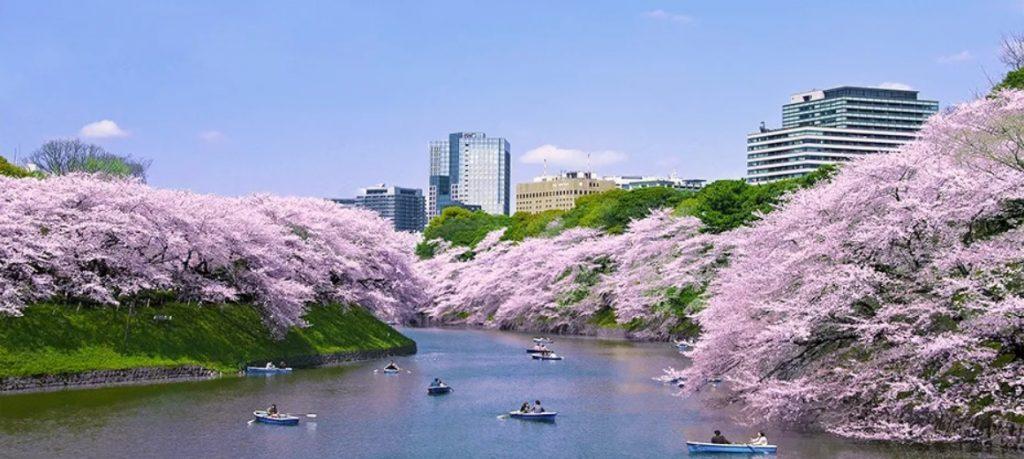 Chidorigafuchi Park Tokyo