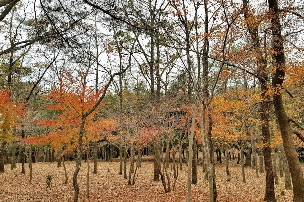 Ryokojin Sanso forest Kyushu The Real Japan Rob Dyer
