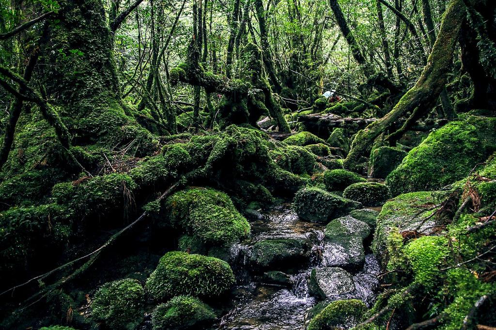 Yakushima Island Kyushu The Real Japan